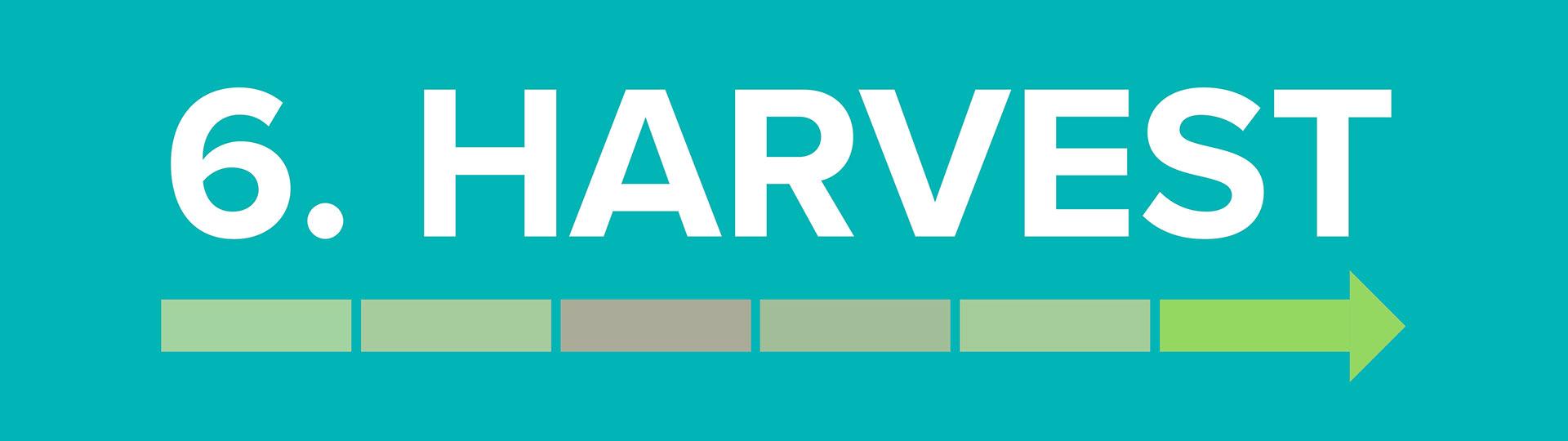 The Startup J Curve Harvest Infographic